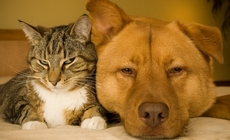 Câmara aprova prisão para quem matar cães e gatos_b