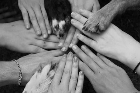direito dos animais